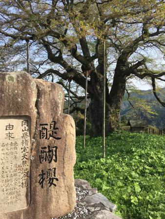 Daigo Zakura: photo3.jpg
