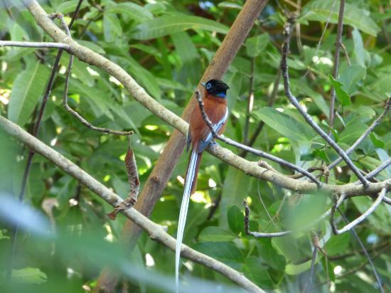 Natura Lodge Nosy Be : nombreux oiseaux endemiques autour du lodge