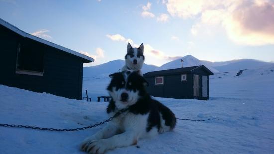 Longyearbyen, النرويج: DSC_0388_7_large.jpg