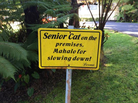 Kilauea Lodge: As a warning when you drive on the lane