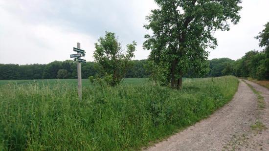 Machern, Alemania: Die Lübschützer Teiche liegen inmitten einer sanft-hügeligen Endmoränenlandschaft.