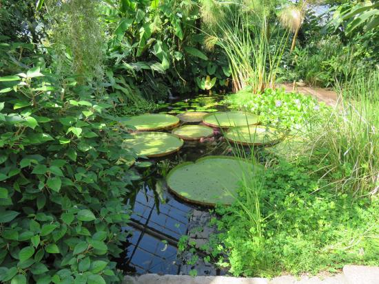 pond in the greenhouse - Picture of University of Dundee Botanic ...