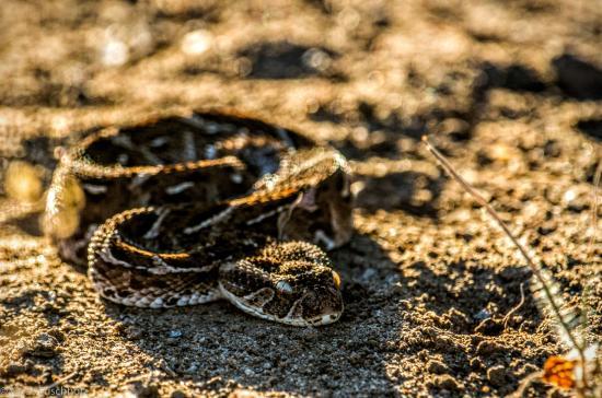 nDzuti Safari Camp Photo