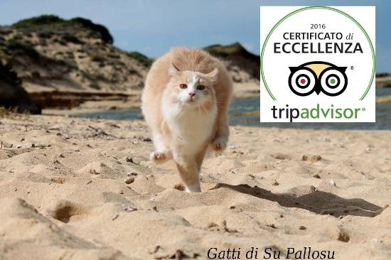 I Gatti di Su Pallosu: La Colonia Felina di Su Pallosu ha ottenuto il Certificato d'Eccellenza 2016 di Tripadvisor.Prim