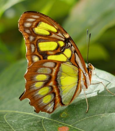 Cinderford, UK: Butterfly farm
