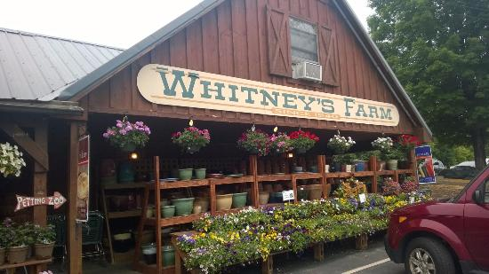 Cheshire, MA: The farm stand with seating among the flowers