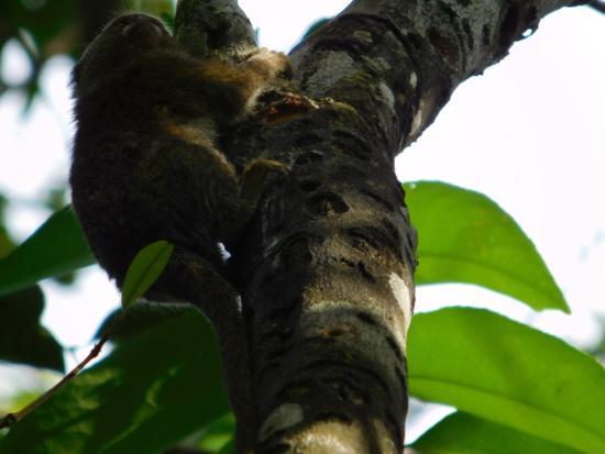 Amazonia Expeditions' Tahuayo Lodge-bild