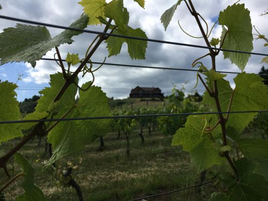 Youngberg Hill Vineyards & Inn: taken from the vineyard