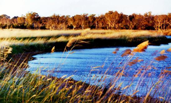 Braeside, Australia: WIND IN THE GRASS