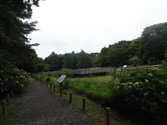 Jindai Aquatic Botanical Garden