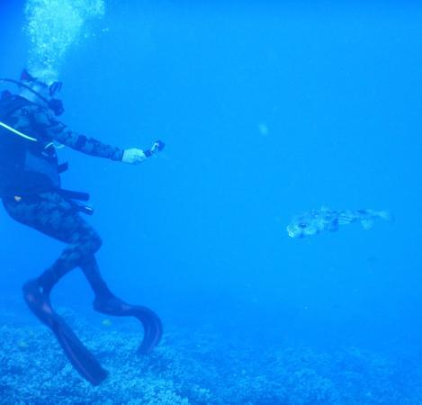 Kaunakakai, Havai: A giant porcupinefish took a fancy to John