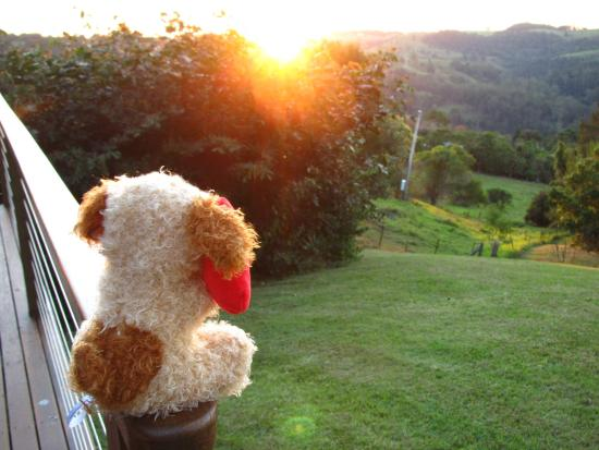 Rosebrook Cottages: Our holiday mascot enjoying the sunset from Cabin 2 - best deck!