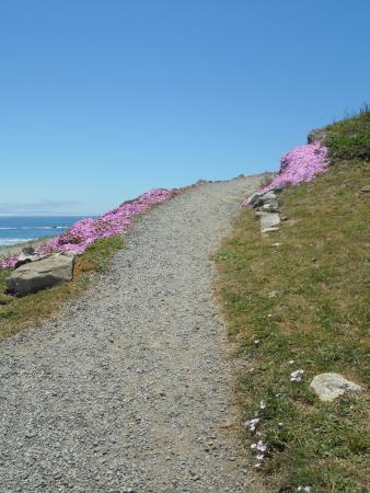Trail up to the light house. Ice plants were blooming, and ... on leaf house plant, ant house plant, steel house plant, lazarus house plant, banana house plant, marijuana house plant, lemon house plant, avocado house plant, jade house plant, sword house plant, dolphin house plant,