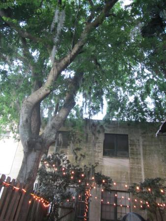 Wine & Cheese Gallery: Tree and lights over the patio