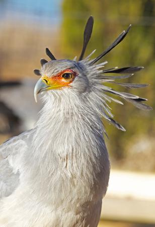 Dullstroom, South Africa: Rooney - Secretary Bird