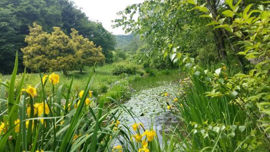 Pyunggang Botanical Garden