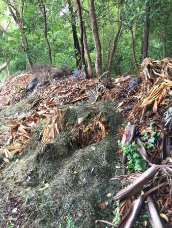 Hinsuay Namsai Resort Hotel: They dump all their rubbish in the garden. It's a filthy shithole.