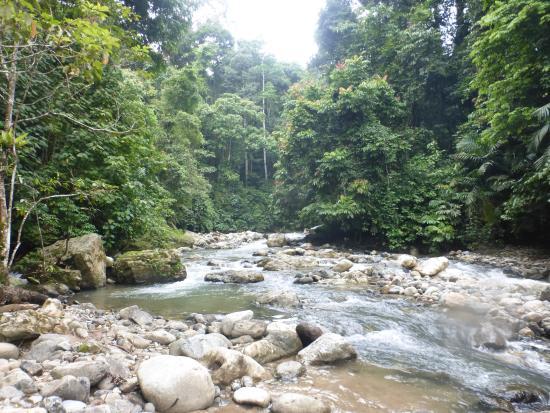 Jungle Trekking in Ketambe with Jhony Jungle