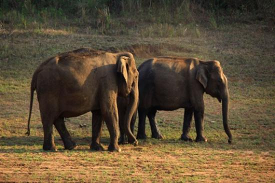 Thekkady, India: Periyar Wildlife Sanctuary