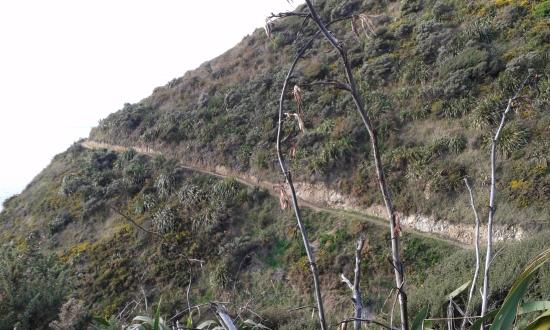 Paekakariki, Nya Zeeland: the narrow track