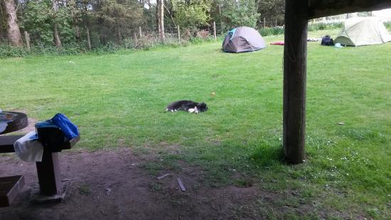 Bankell Farm Camping & Caravan Site