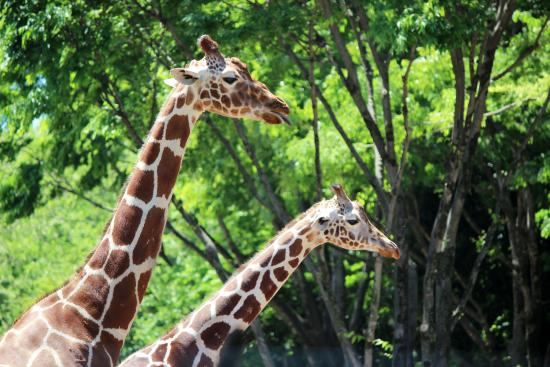 多摩動物公園 - Picture of Tama Zoological Park, Hino - TripAdvisor