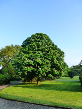 Cobham, UK: The gardens