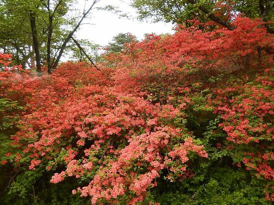 Nagamine Park