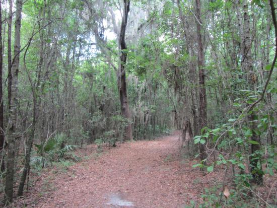Alachua, FL: Trail through a more wild area