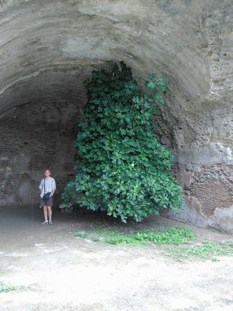 Baia Archeological Park : IMG_20160601_093922_large.jpg