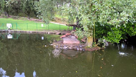 Capre nel parco photo de rocca borromea di arona arona for Tartarughe nel laghetto