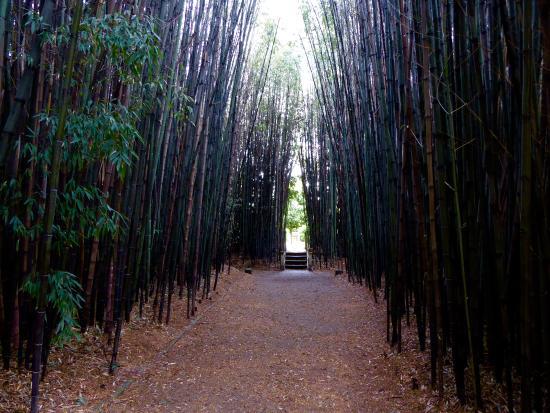 balneario davila jardn de bambu del hotel davila