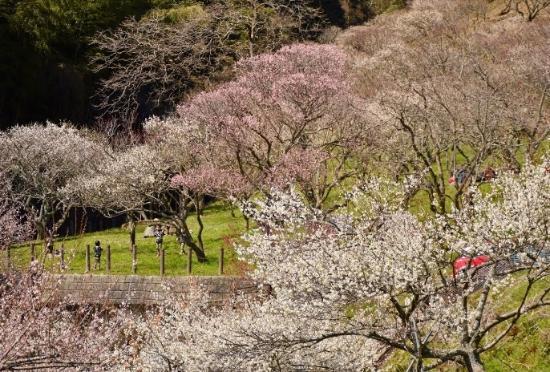Mitake Bairin Park