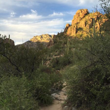 Loews Ventana Canyon Resort: Canyon trail