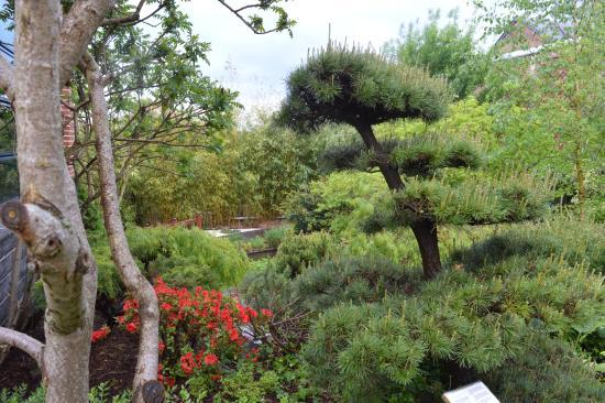 Sains du Nord, France: jardin
