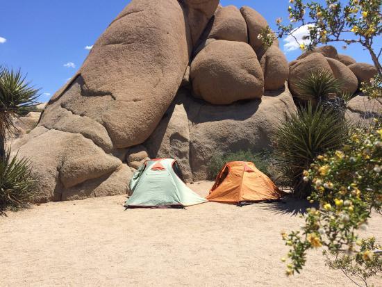 Jumbo Rocks Campground照片