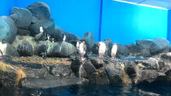 兰卡威海底世界