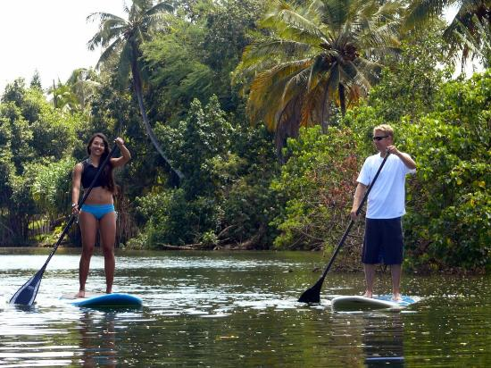 Surf N Sea: Stand Up Paddling on the Anahulu Stream