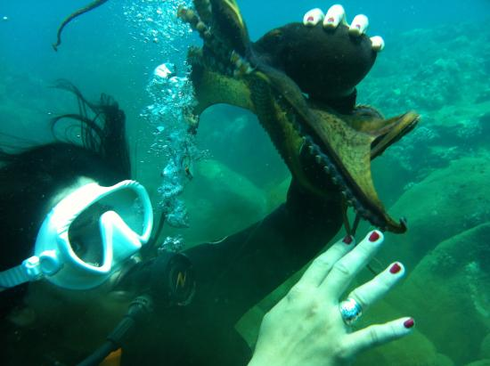 Surf N Sea: Dive Tours and Certification No experience necessary!
