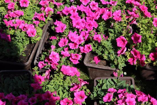 Landhotel Golf: beautiful flowers in the backyard