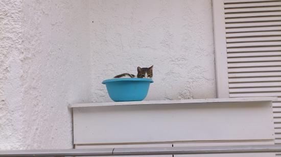 Hotel Elman : Marina ist eine Katzenfreundin