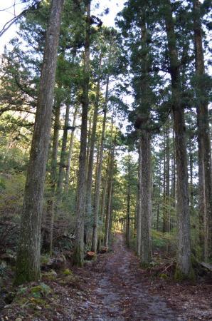 Sotaro Sugi Trees
