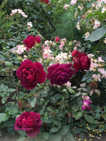 Keio Floral Garden Ange