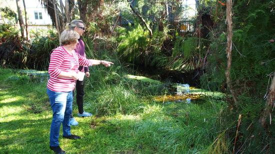 Strahan Holiday Retreat: Platypus Creek- Active Platypus