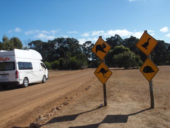 The way to Hanson Bay koala walk