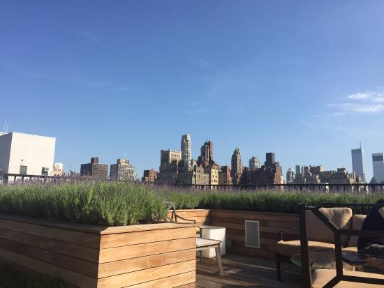 The Surrey: Love the rooftop garden!