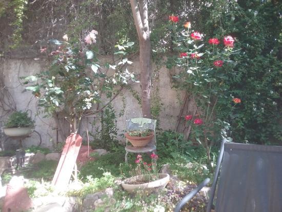 Barkai Studios: Garden view