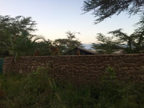 An oasis in Amboseli