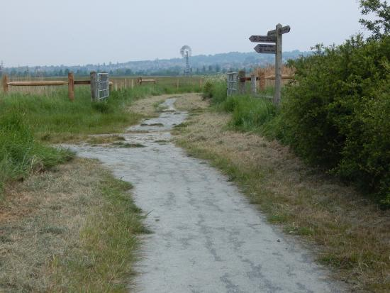 RSPB West Canvey Marsh: view of West Canvey Marshes