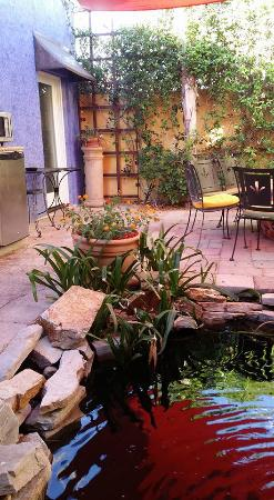 Milo's Inn at Boulder: The courtyard and pond. Perfect breakfast spot.